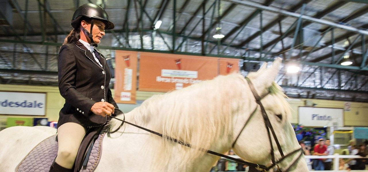 Horse Breeds Expo
