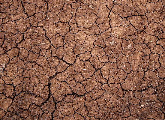 Queensland Drought Appeal