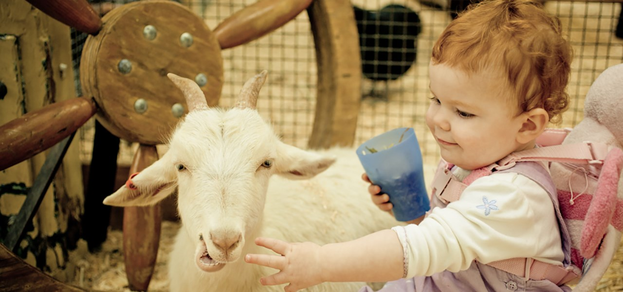 5 Farm Animals With The Friendliest Personalities